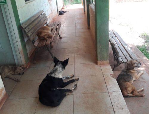 Bem-estar animal e controle populacional de cães e gatos em área urbana