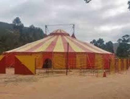 MPMG recomenda ao Município de Felisburgo que não autorize a instalação e realização de espetáculos circenses que utilizem animais