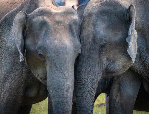 Projeto de Lei no Senado quer que animais sejam legalmente tratados como seres com sentimentos