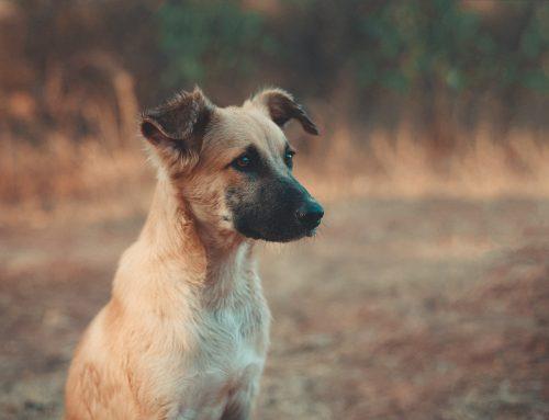 Brasil tem mais de 170 mil animais abandonados sob cuidado de ONGs, aponta instituto