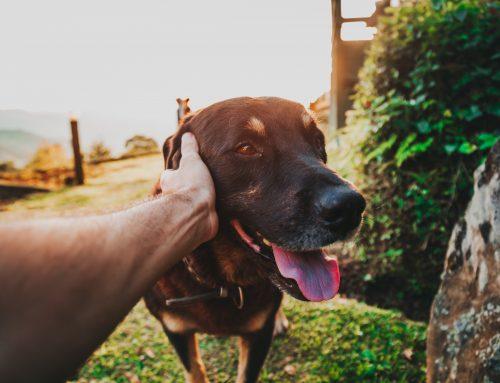 Senado aprova projeto que cria natureza jurídica para os animais