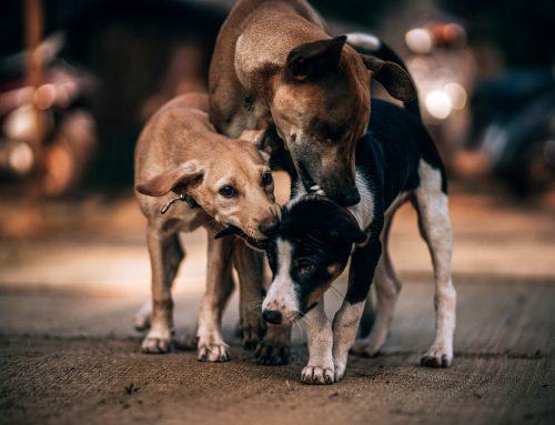 Projeto aprimora lei de proteção a animais de rua em Minas Gerais