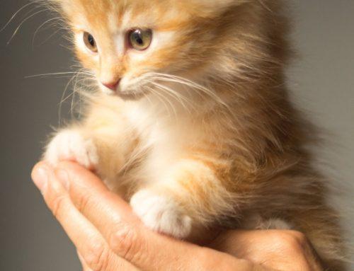 Uberaba tem evento gratuito sobre bem-estar animal