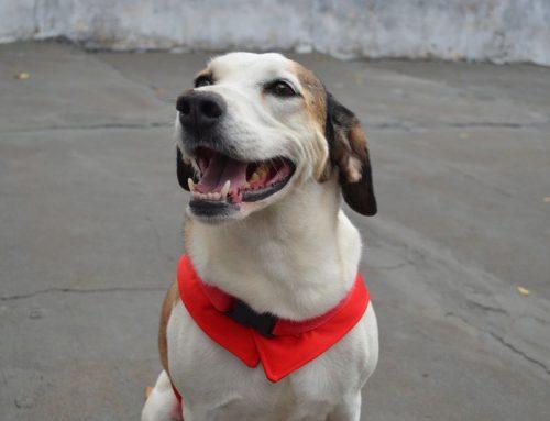 Resgatados das ruas, vira-latas são reabilitados e viram cães 'terapeutas' em Ribeirão Preto, SP