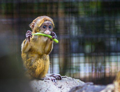 Município de Uberaba assina acordo com MPMG para adequação de zoológico municipal