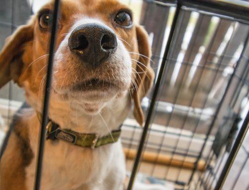 Universidade de Maringá (PR) é multada por submeter cães a experimentos cruéis