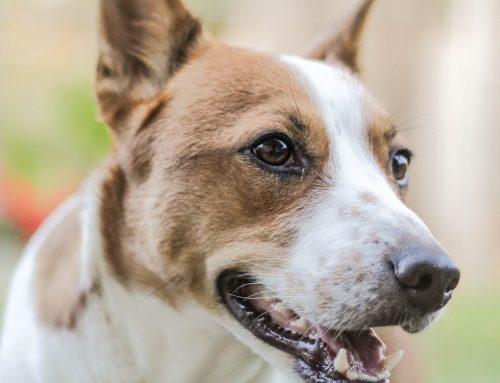 PBH inaugura mais um centro para castrações de cães e gatos