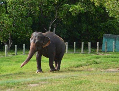 Audiência sobre elefanta Lady termina com autorização para transferência do animal em até 45 dias