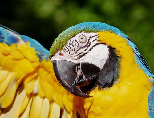 Centro de Triagem e Reabilitação de Animais Silvestres de Patos de Minas será inaugurado nesta quinta-feira