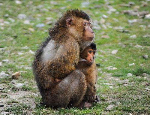 PL reconhece que animais têm sensações conscientemente