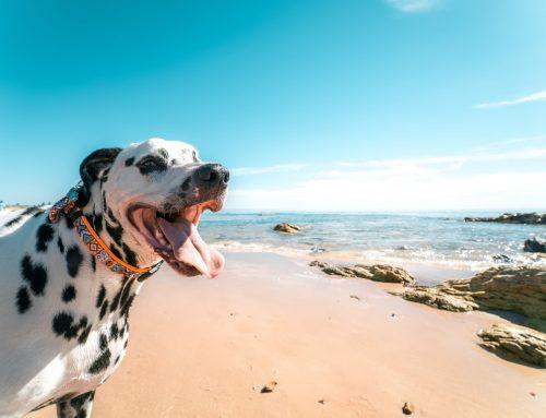 Nova lei fluminense autoriza a permanência de animais nas praias do município