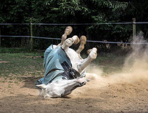 Atendendo a um pedido do Ministério Público do Estado do Pará (MPPA), rodeio é suspenso para evitar crueldade com animais