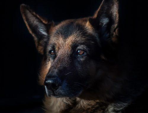 A pedido do MPSC, decisão judicial proíbe que cachorros sejam explorados para caça e pesca em SC