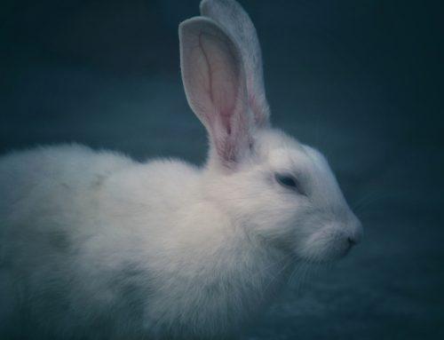 Avon anuncia fim de testes em animais em sua produção global