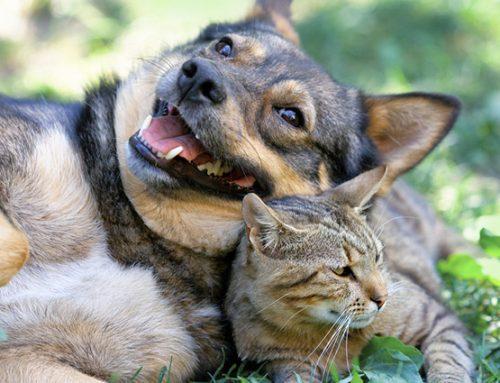 MPMG promove oficinas de capacitação em manejo de cães e gatos em Itatiaiuçu/MG