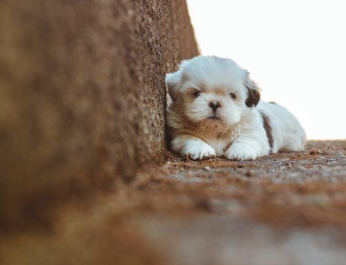 Justiça proíbe venda de animais domésticos em vias e praças do DF
