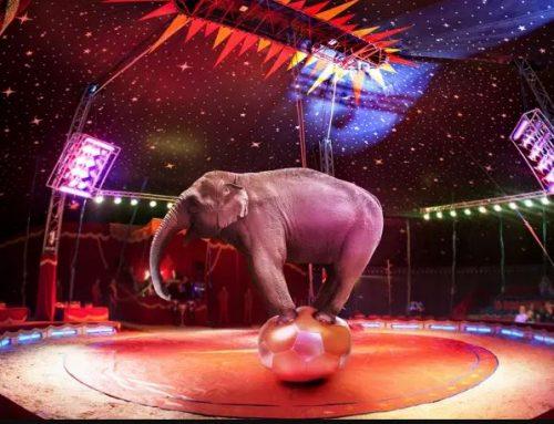 Reino Unido proíbe animais selvagens em circos