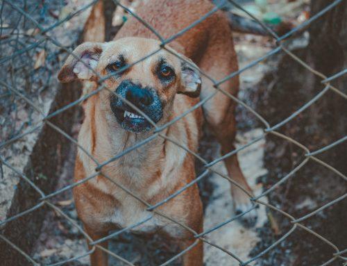 Projeto de lei criminaliza rinha de animais