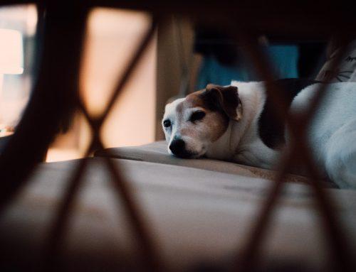 Viajar e deixar animais sozinhos configura crime de abandono