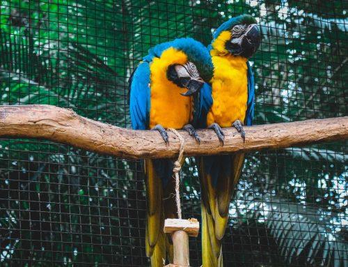 MPSP e Prefeitura de Rio Claro firmam acordo para criação de centro de reabilitação animal
