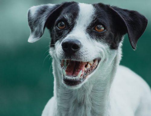 Poder Judiciário do Mato Grosso possui Juizado especializado na causa animal