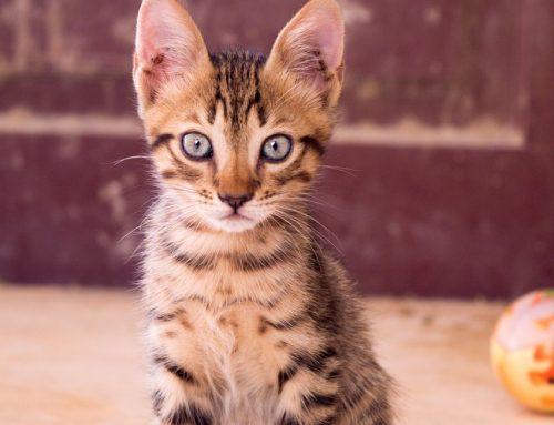 MP-GO quer fim dos maus-tratos a animais no Centro de Zoonoses de Goianésia