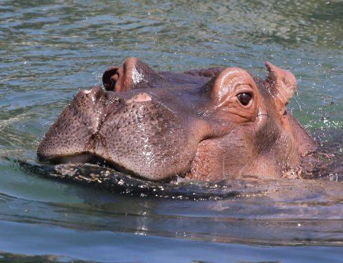 Zoológico do Rio se transforma em 'bioparque' e poderá beneficiar 47 espécies ameaçadas de extinção