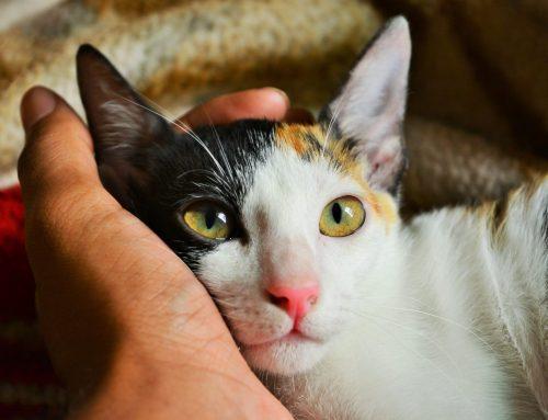 Juiz aceita 23 gatos como autores de ação de indenização por maus-tratos