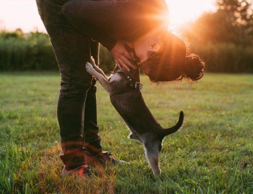Justiça determina que poder público forneça remédio para cão com leishmaniose