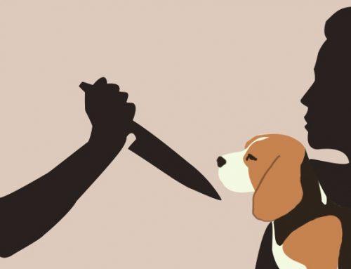 Evento discute relação entre maus-tratos a animais e violência doméstica em MG