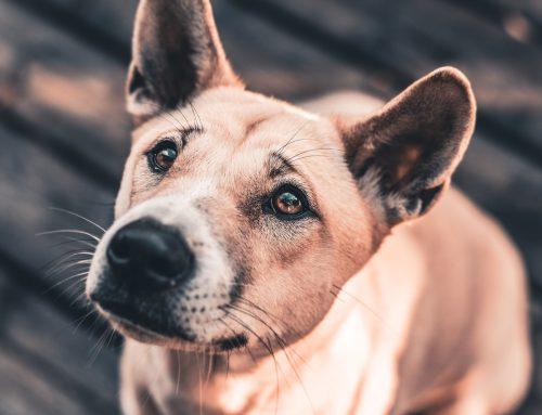Brasil cai em ranking de legislação de proteção animal