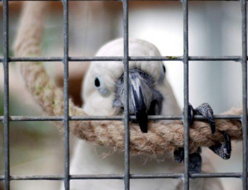 MPMG aciona Justiça para que animais expostos no Mercado Central sejam transferidos para abrigos em até 72 horas
