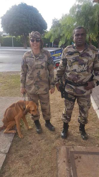 Policiais resgatam cachorros abandonados