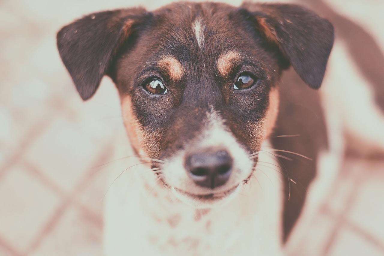 cachorro olhando para a foto