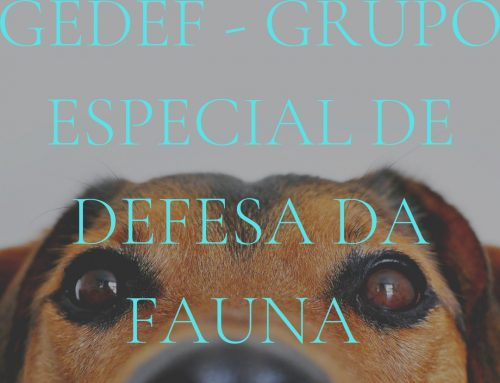 Conheça o Projeto Grupo Especial de Defesa da Fauna (GEDEF)