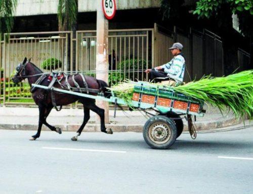 Carroças urbanas : perpetuação da miséria humana e animal