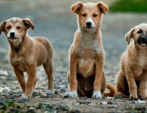 Conheça a Comissão de Proteção à Fauna criada pela Prefeitura de Itabirito