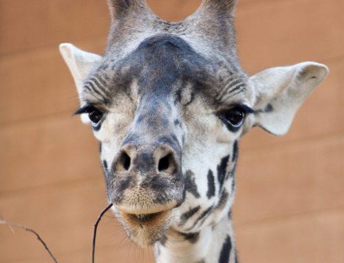 Lei proíbe criação de novos zoológicos ou aquários em SP