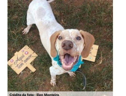 Abrigo virtual busca lar para animais atingidos pela tragédia de Brumadinho, em MG