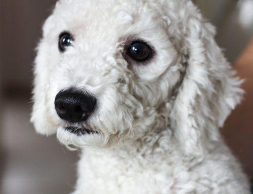TJMG condena homem que matou cachorro