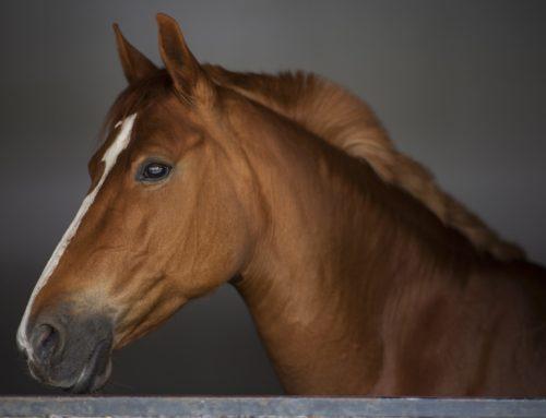 TJMG: Homem é  condenado por morte de cavalo