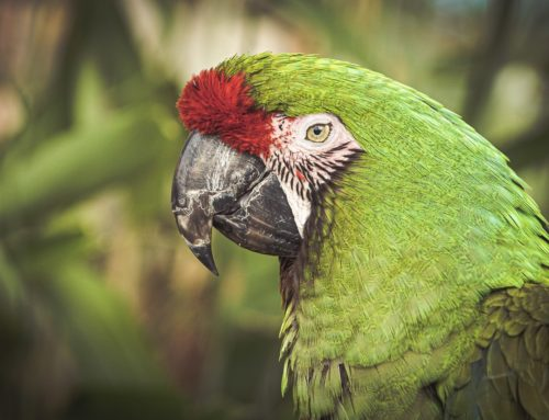 Tráfico tira 38 milhões de animais da natureza por ano e gira R$ 3 bi no Brasil